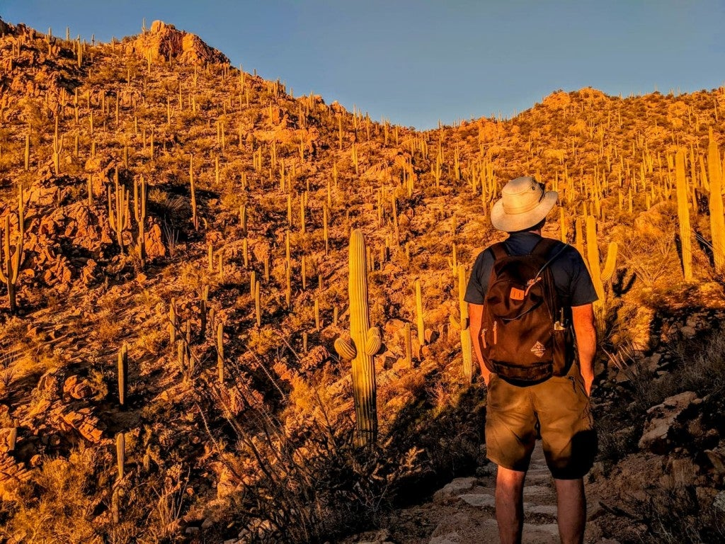 Man in sun hat standing beside cactus field at golden hour.