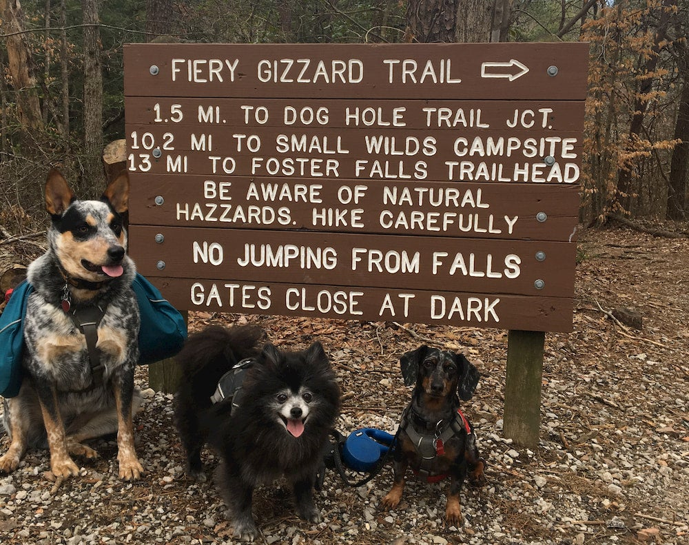 Three dogs standing next to sign in forest