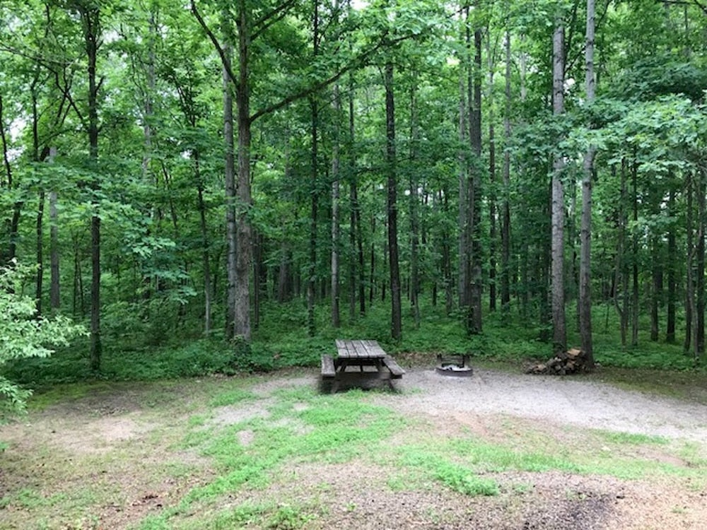 picnic table visible in empty shawnee national forest campsite