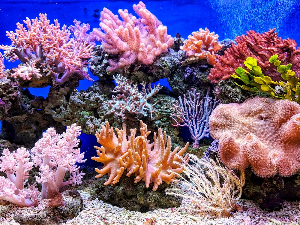 Colorful coral reef in an underwater tank