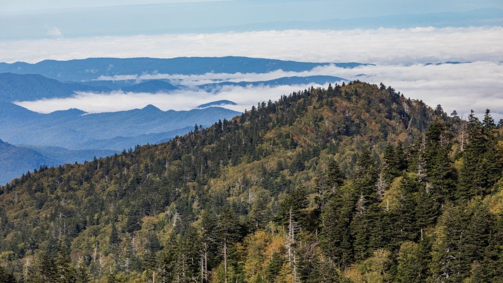 the peak of Mt. Leconte in tennessee's great smoky mountains national park