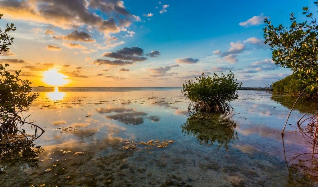 Mangroves at sunset in the Florida Keys.
