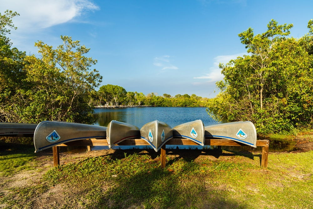 a row of canoes near a spring in florida's Collier-Seminole State Park