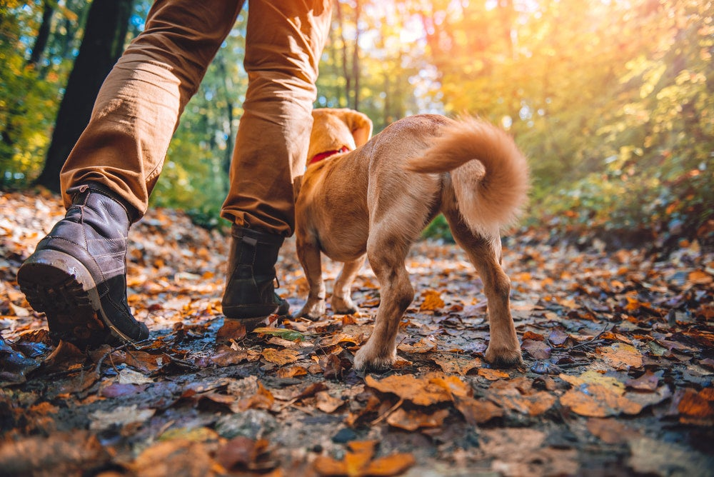 a man walking with his dog on a trail