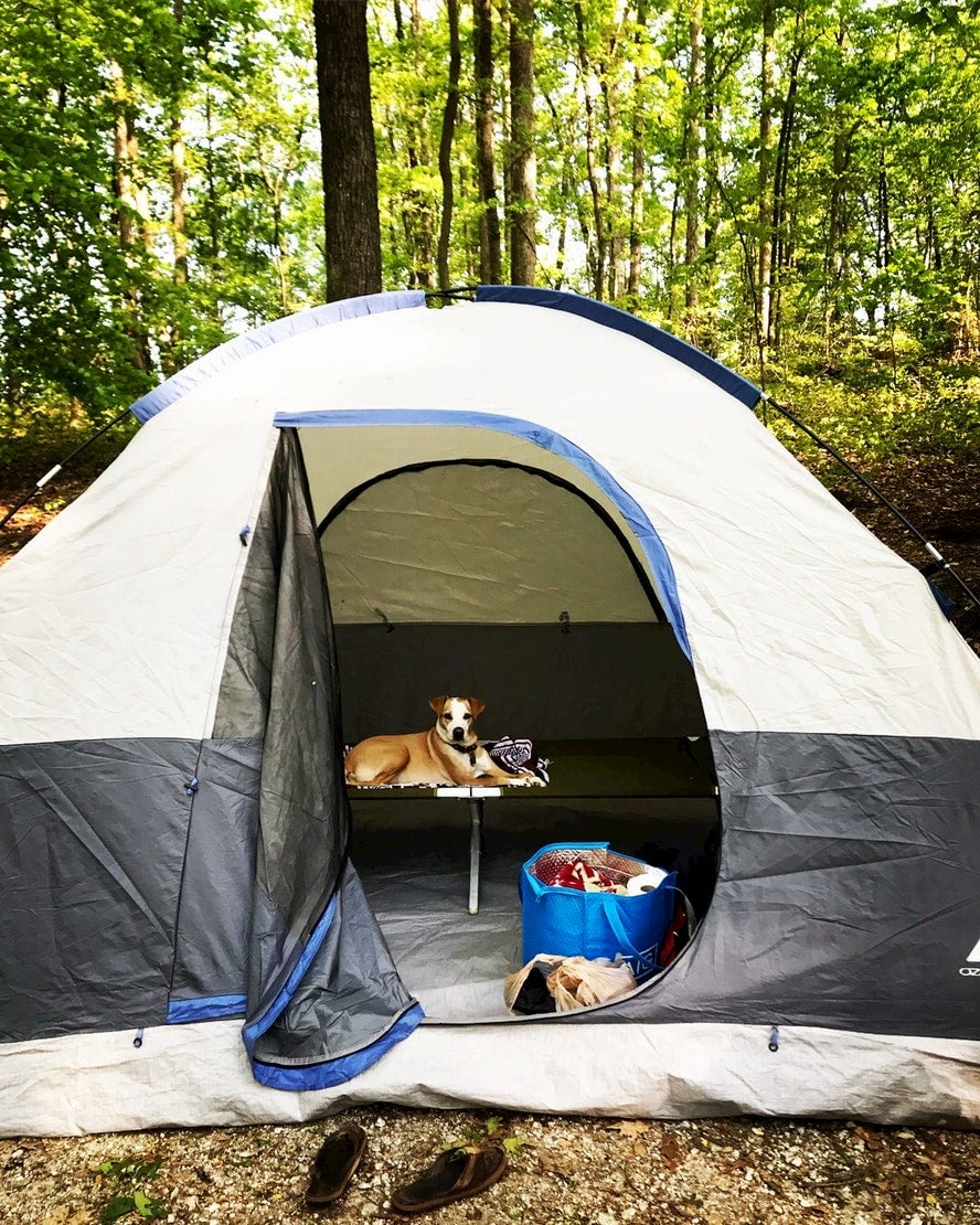 Dog sitting in tent in sunny forest.