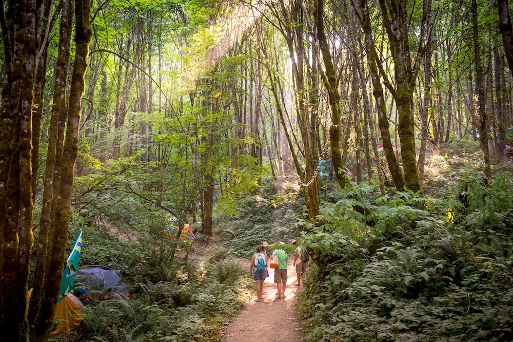 People walking on path in forest with tents in forest