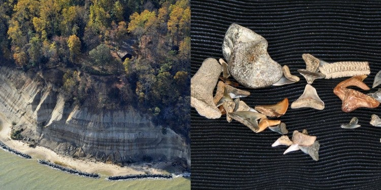a cliff near the shore of a river next to a table holding shark teeth fossilized
