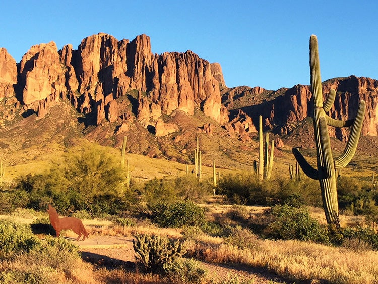 a series of cacti in the desert beneath the superstition mountains in arizona