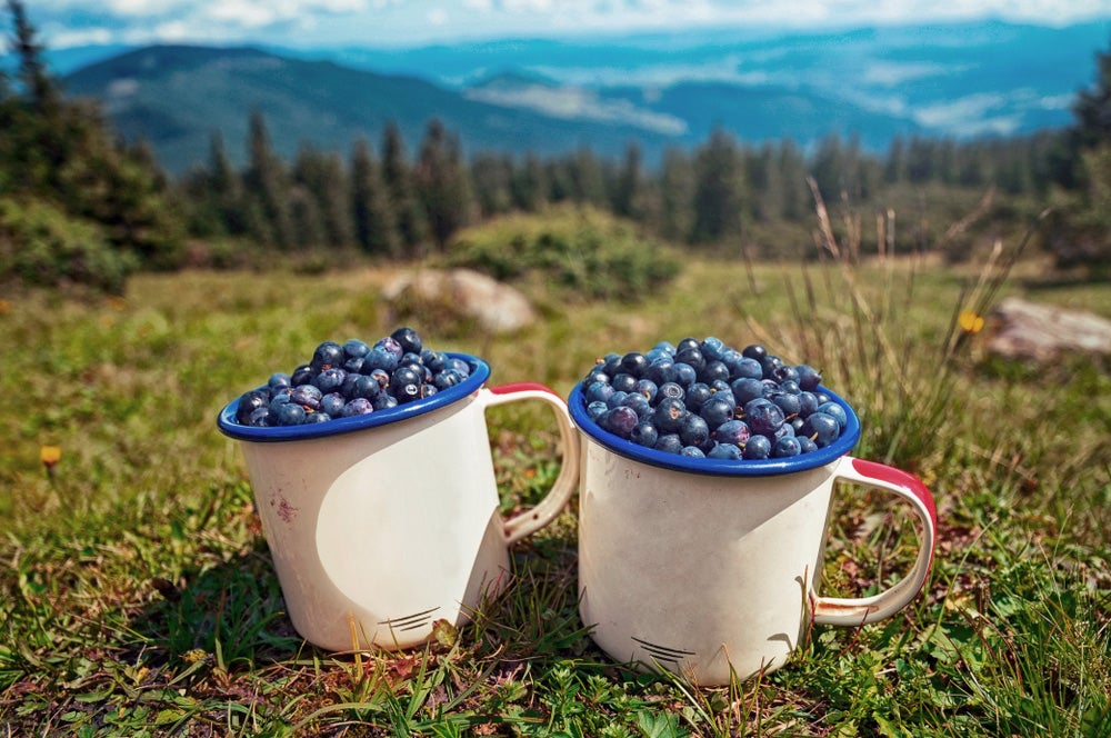 Blueberries in cups looking with mountains in background