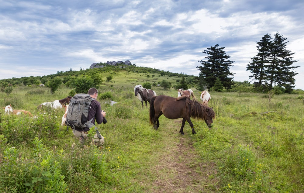 a hiker encounters wild horses on a bald mountain in virginia