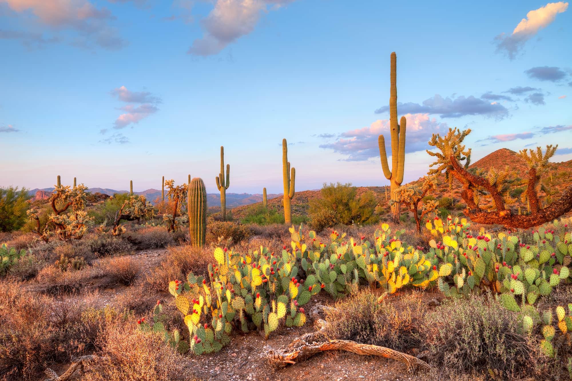 Panoramic view of cacti and sky and mountains