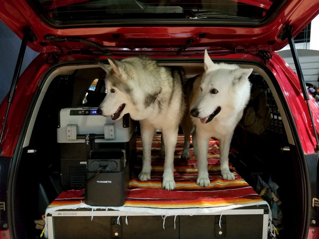 two dogs in the trunk of a car next to an electric cooler at outdoor retailer