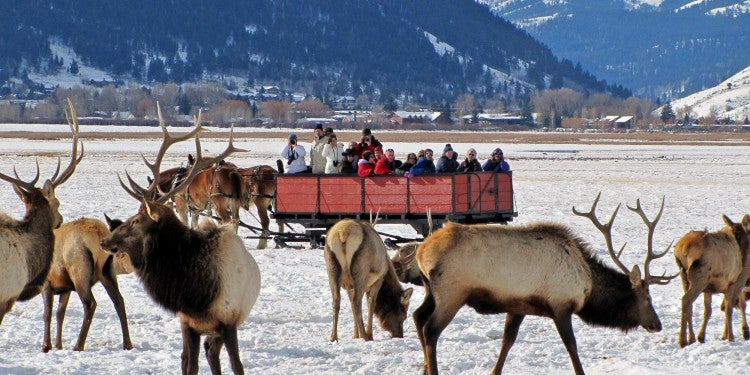 national elk refuge with sleigh
