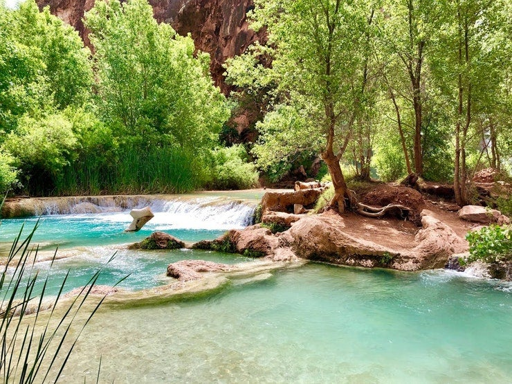 clear blue waters surrounded by lush trees at Havasu Falls, photo from a camper on The Dyrt