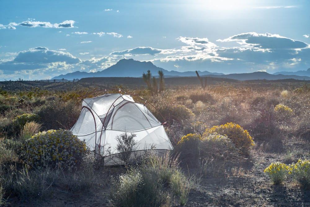 Tent set up in dispersed camping land between the desert brush.
