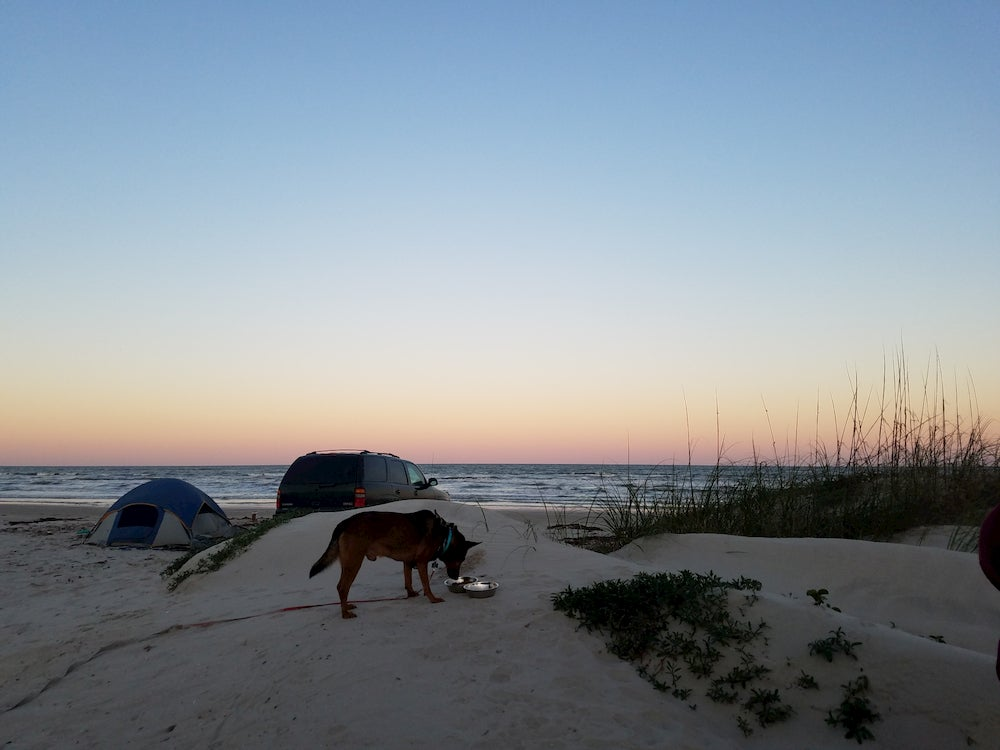 Dog at beach with tent in background