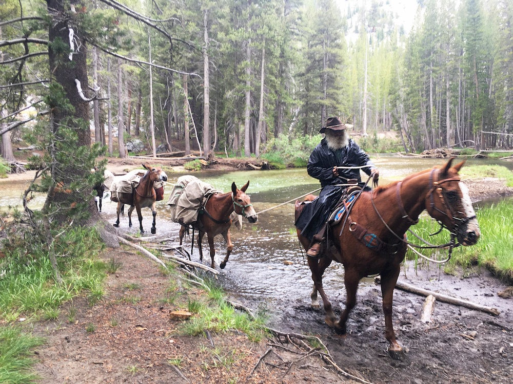 Man crossing river on John Muir Trail with horses and mule
