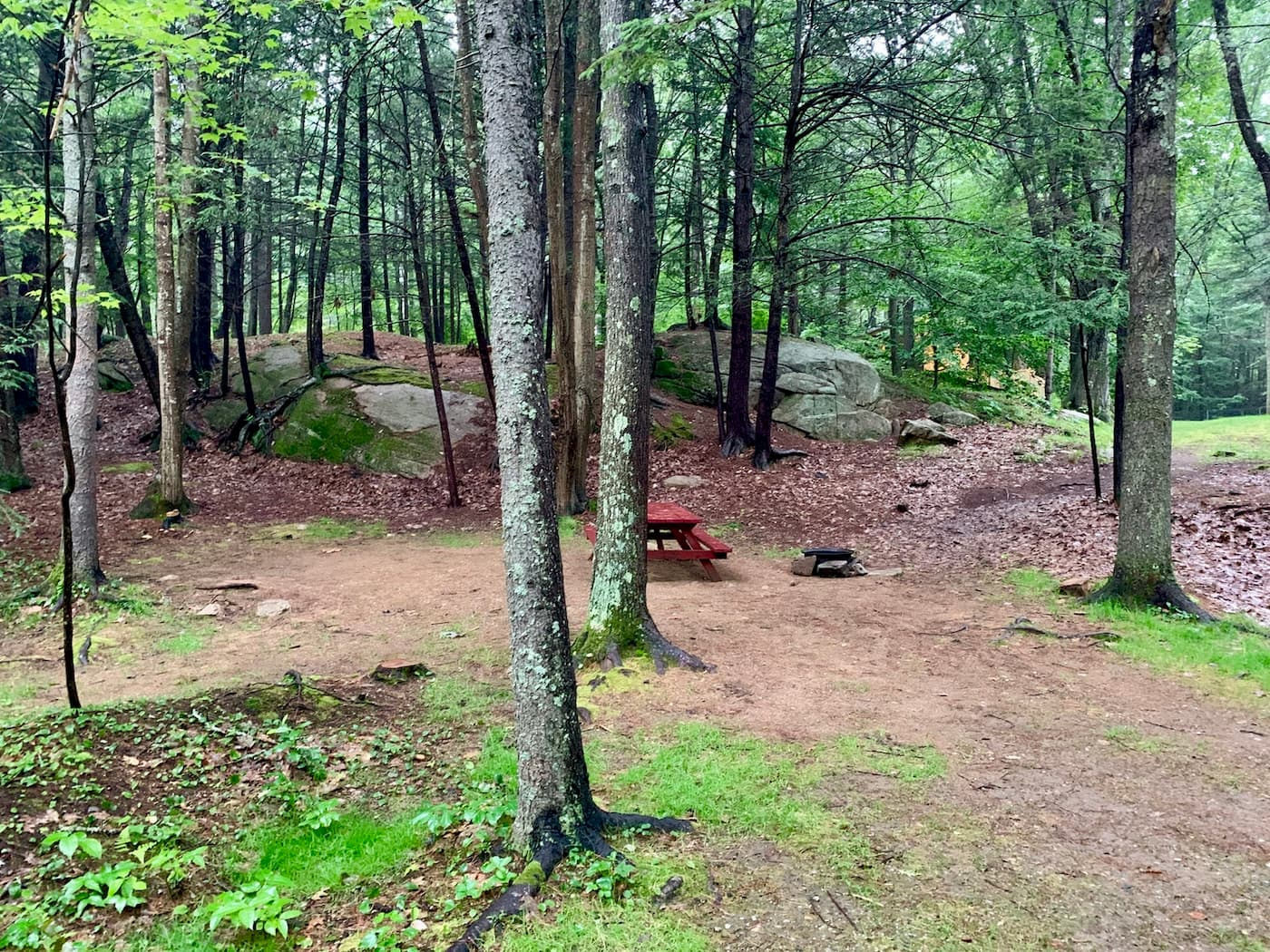 Picnic table in forested campsite.