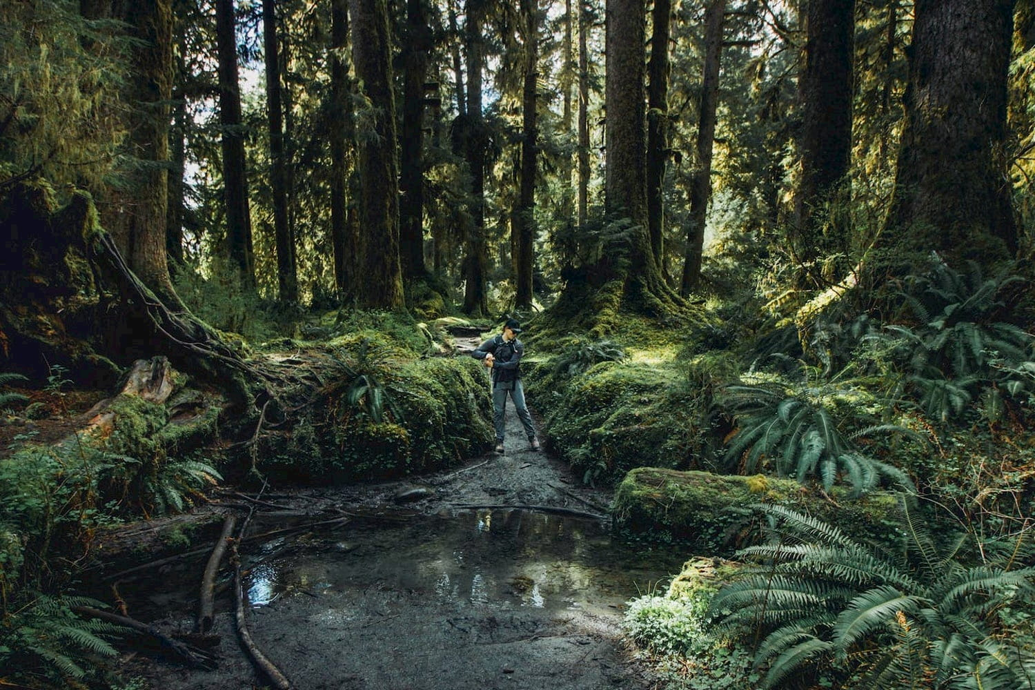 Person hiking in the Hoh rainforest.