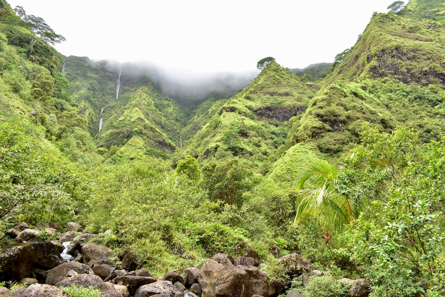 Lush green rainforests of Hawaii speckled with waterfalls.