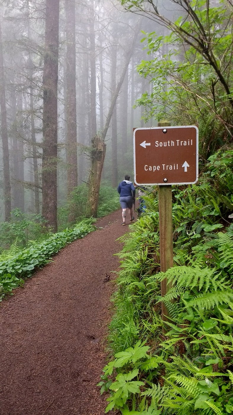 Misty hiking trail surrounded by green ferns and a trail sign.