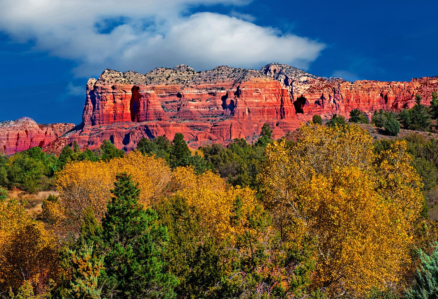 trees with yellow leaves in front of red cliffs and blue sky