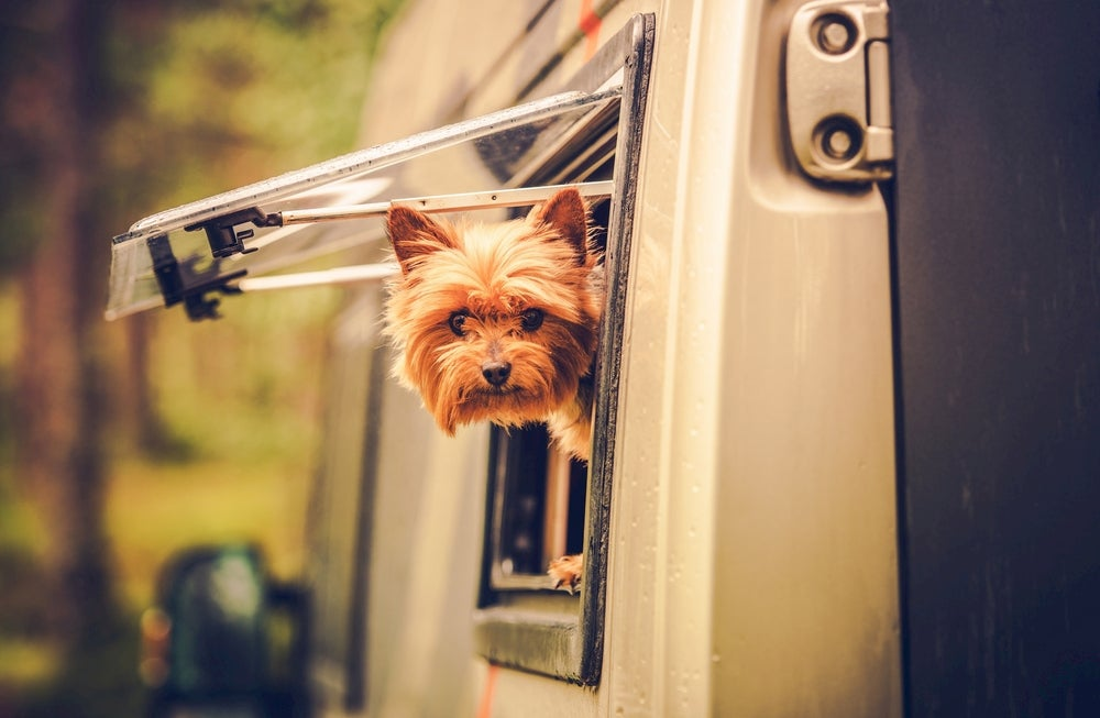 Small teacup dog sticking its head out of the window of an RV.