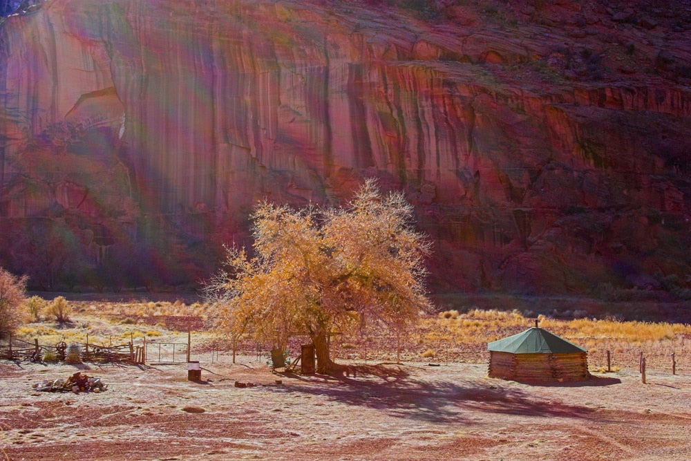 Native American hogan beside a tree in Canyon de Chelly,.