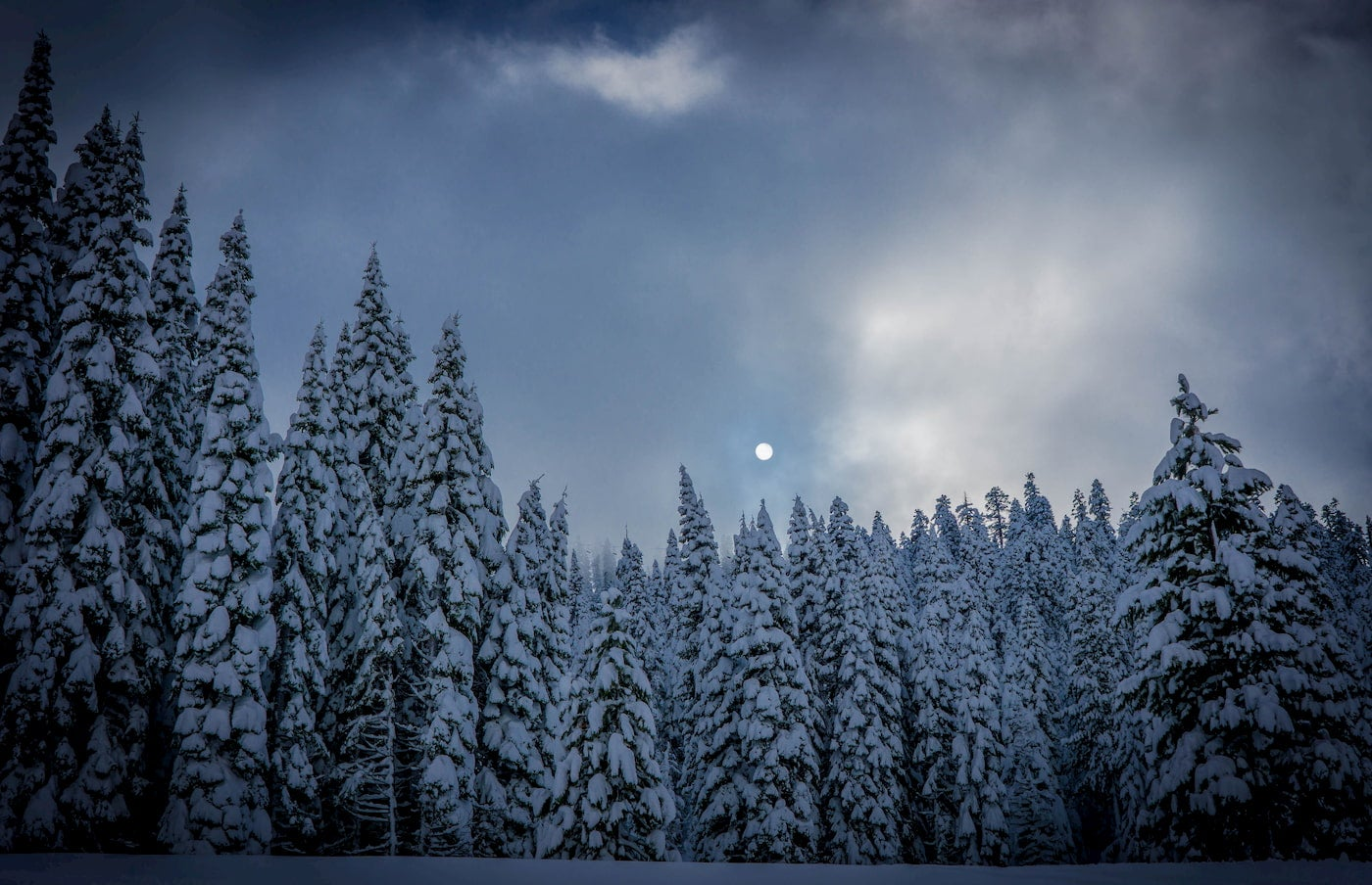 Snow covered trees with a clear full moon above them.