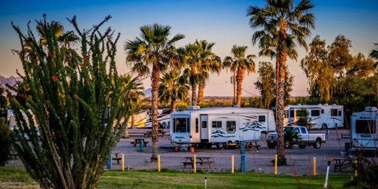 RV park in Arizona desert surrounded by palm trees.