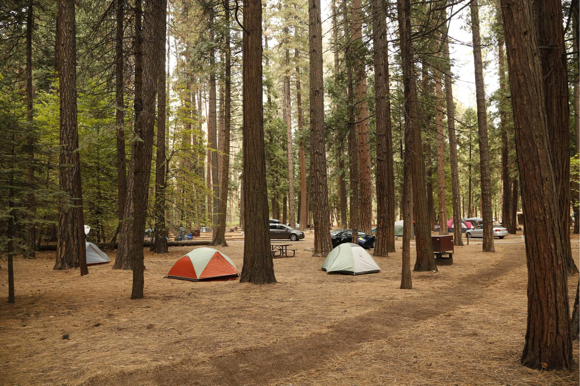 a campground in yosemite national park