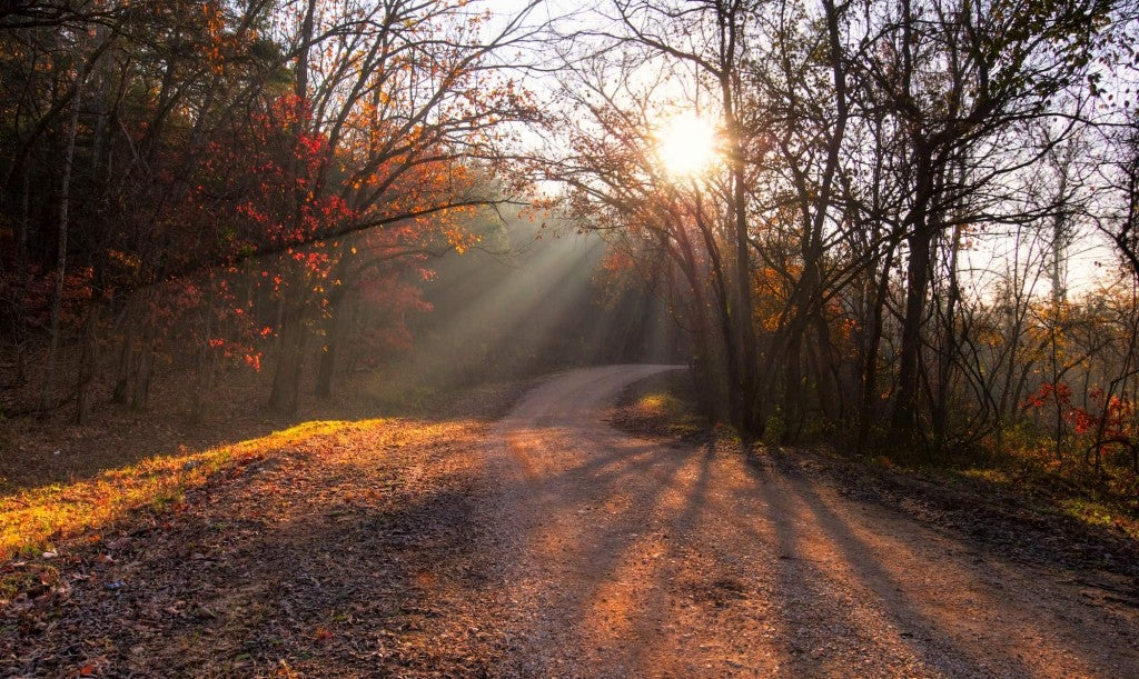 dirt road and sun peeking through the forest canopy