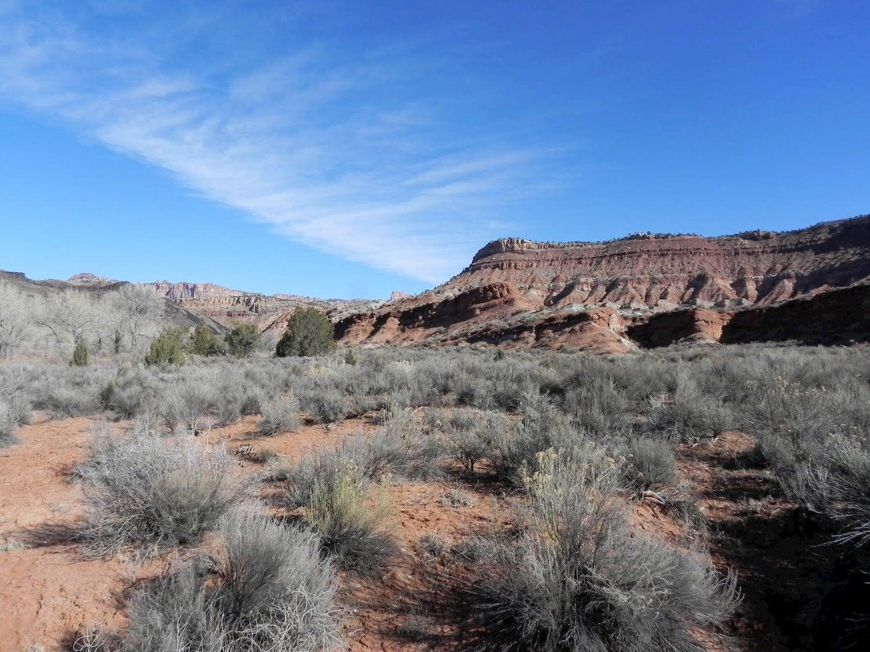 scrub bush and red rocks in a utah desert