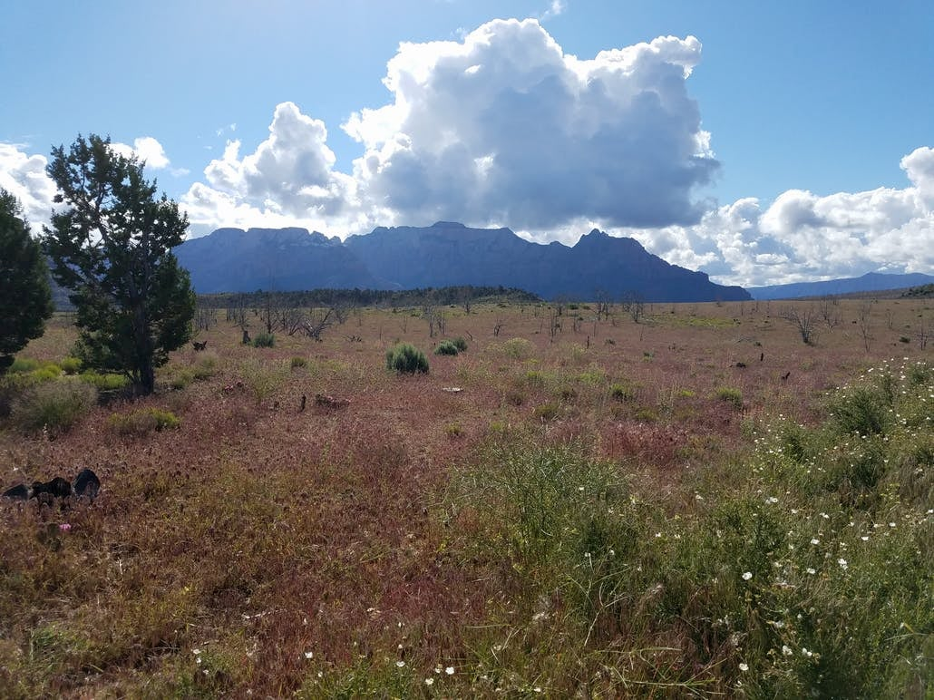 dry meadow with scattered flowers and trees. mountains in the background