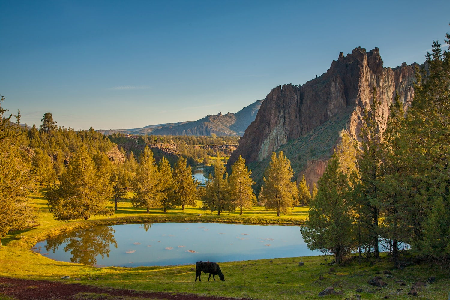 cow in front of lake at smith rock state park