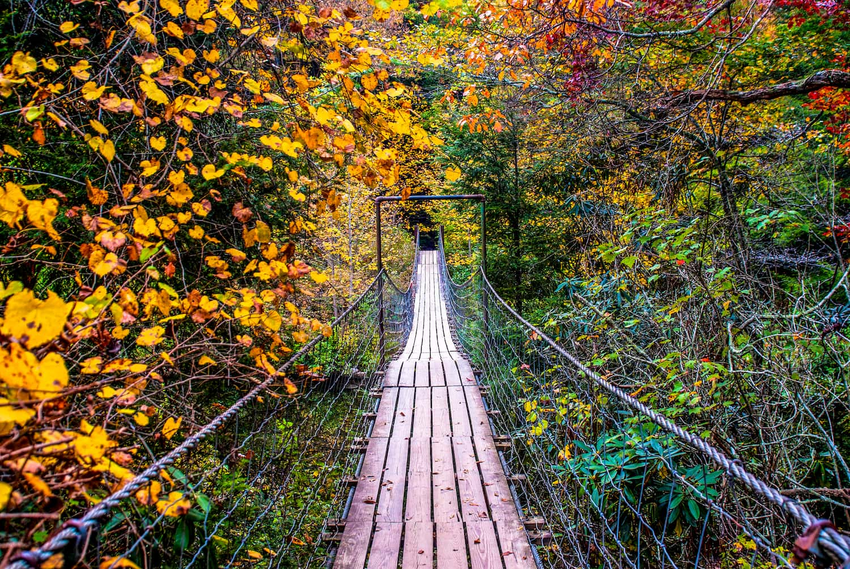 bridge going through colorful dense fall forest