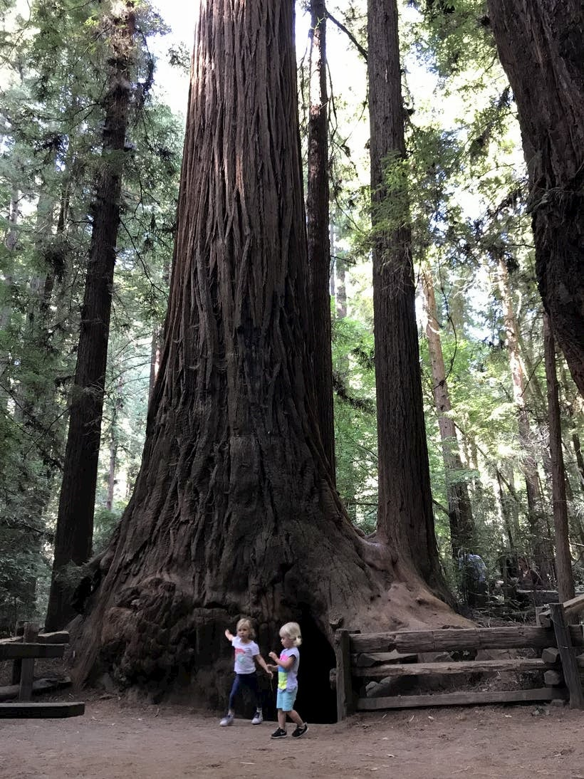 Two children standing under a large redwood tree.