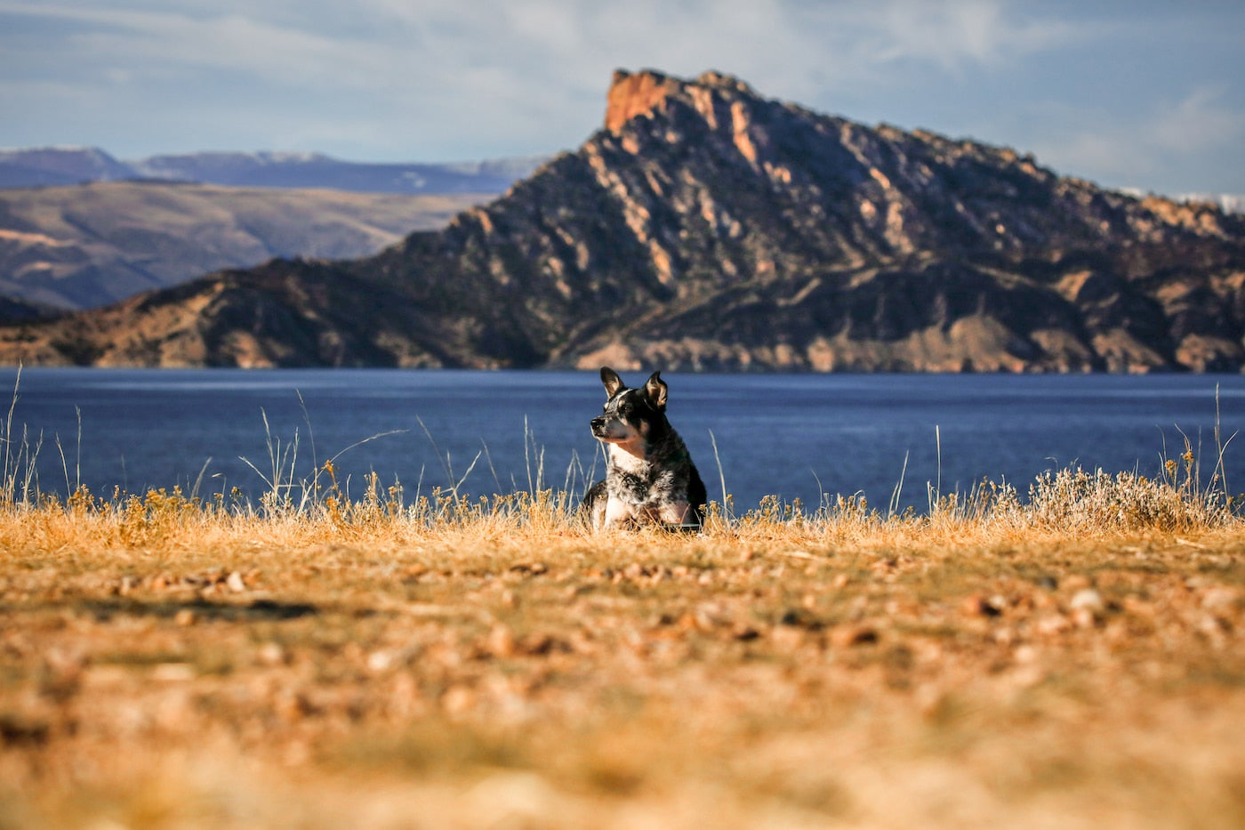 Dog sitting in a field the foreground with water and a large rock formation in the background.