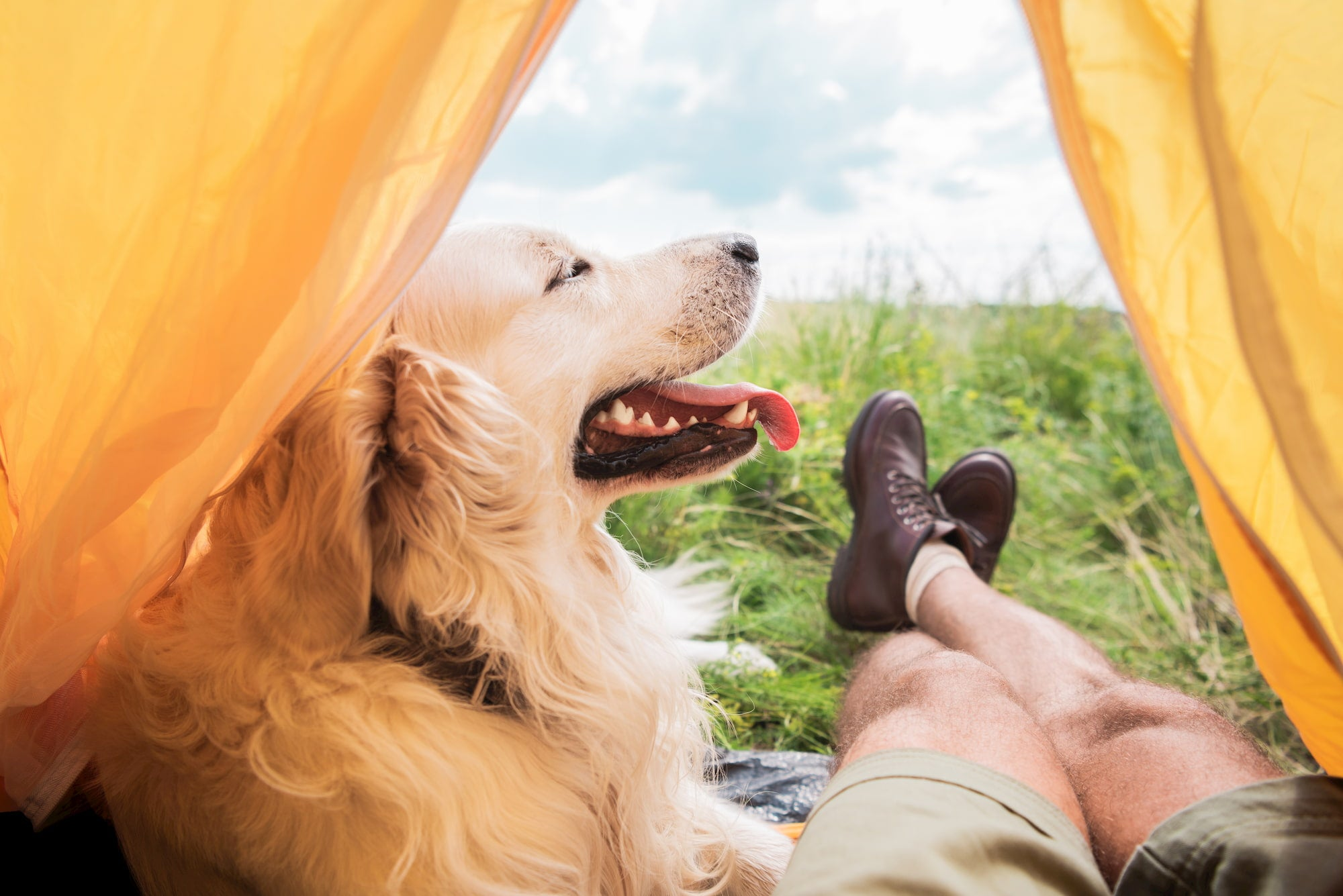 dog and person sitting inside of tent