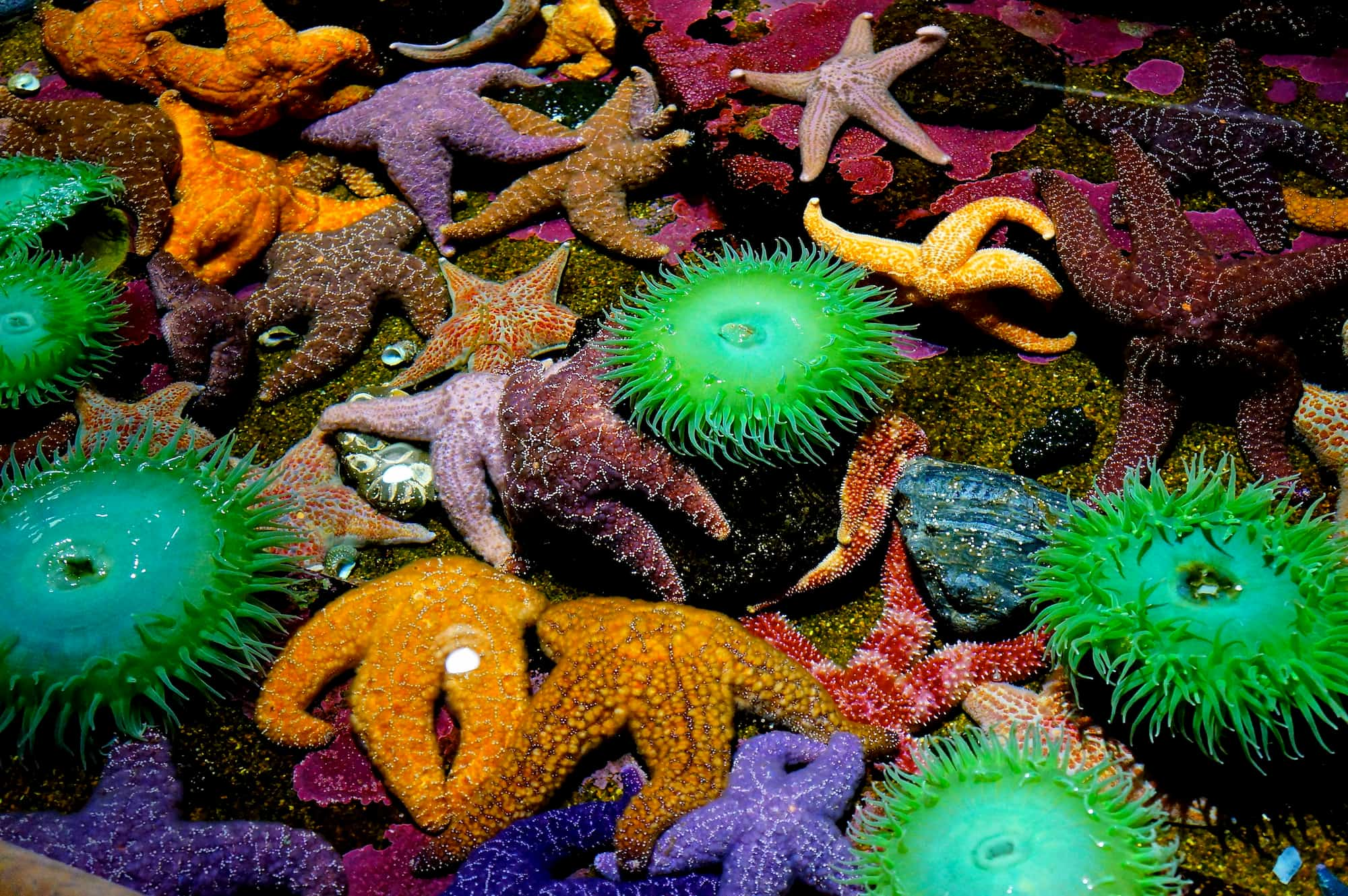 close-up of many colorful tidepool creatures