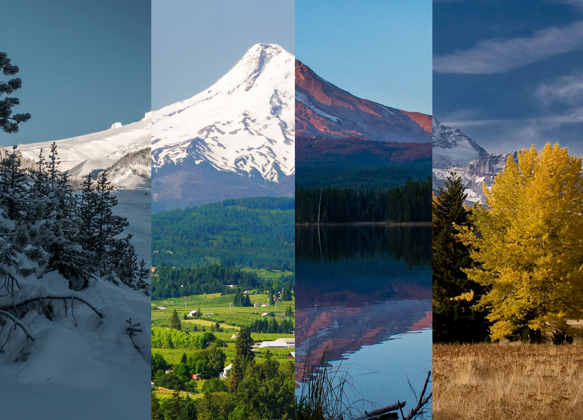 Four separate images of Mt. Hood collaged together.
