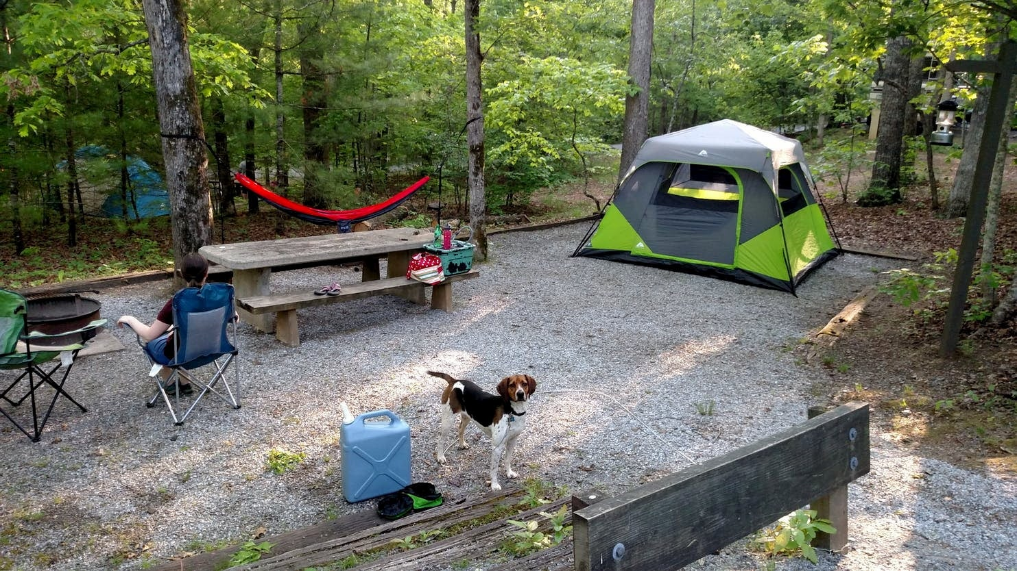 Dog standing in front of forested campsite with tent and hammock.