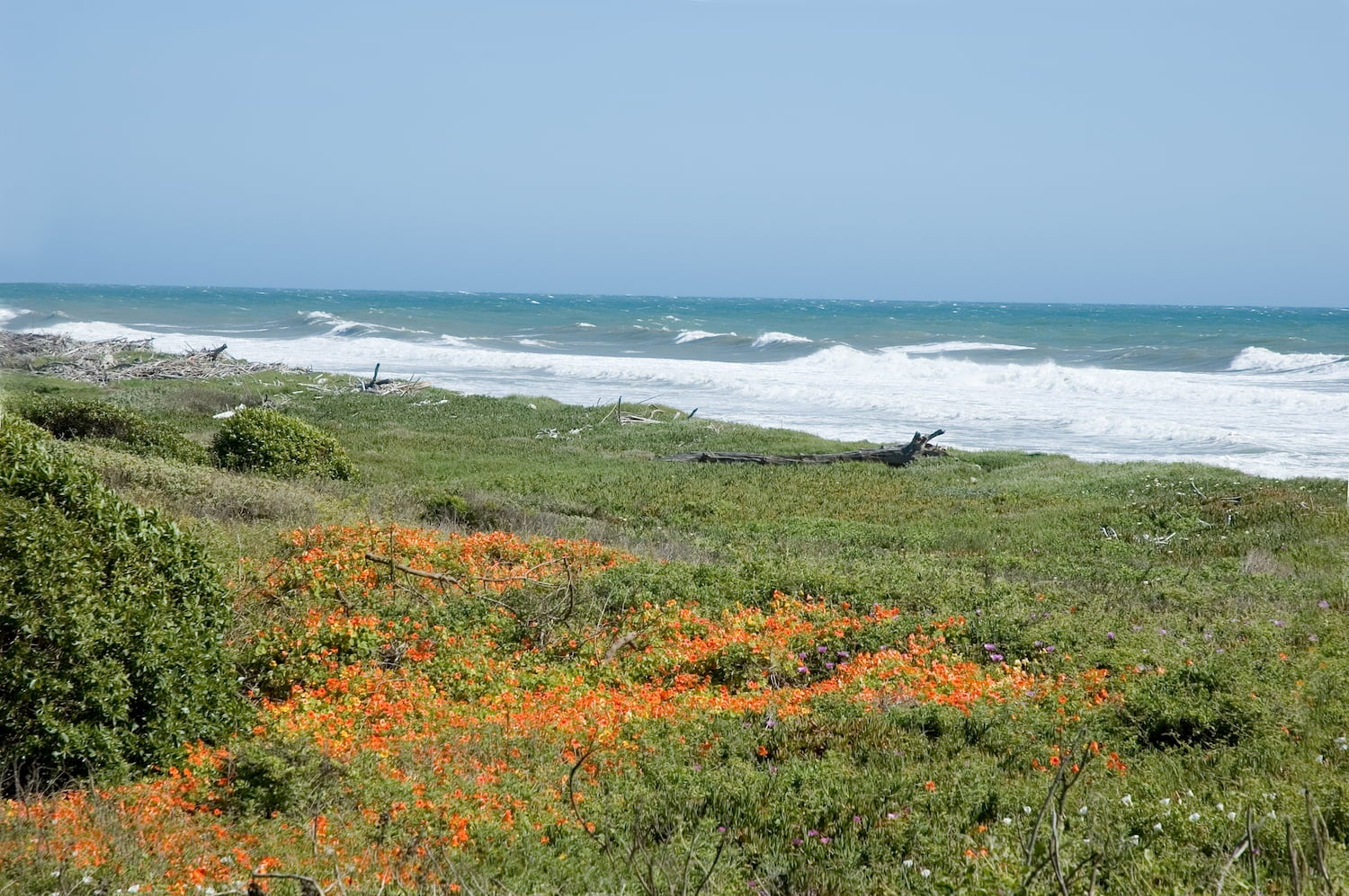 view of wildflowers and the ocean at emma wood state beach