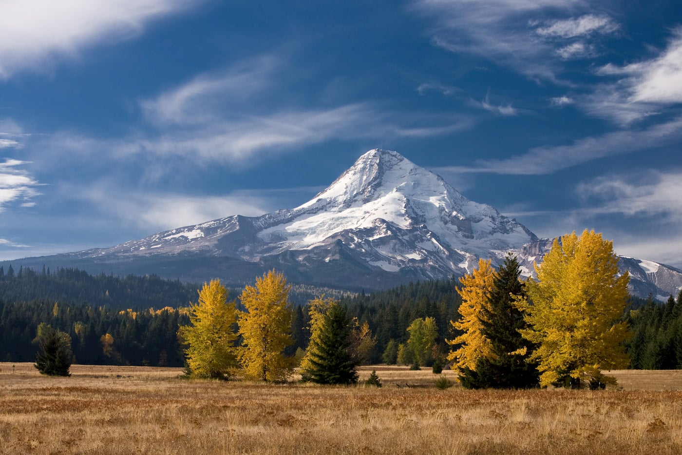 Yellow fall foliage on trees in the foreground, snow capped Mt. Hood in the background.
