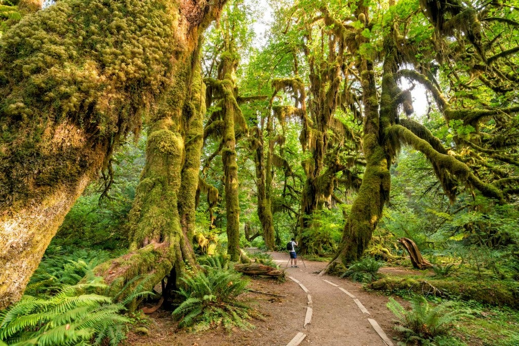 hoh rain forest olympic national forest