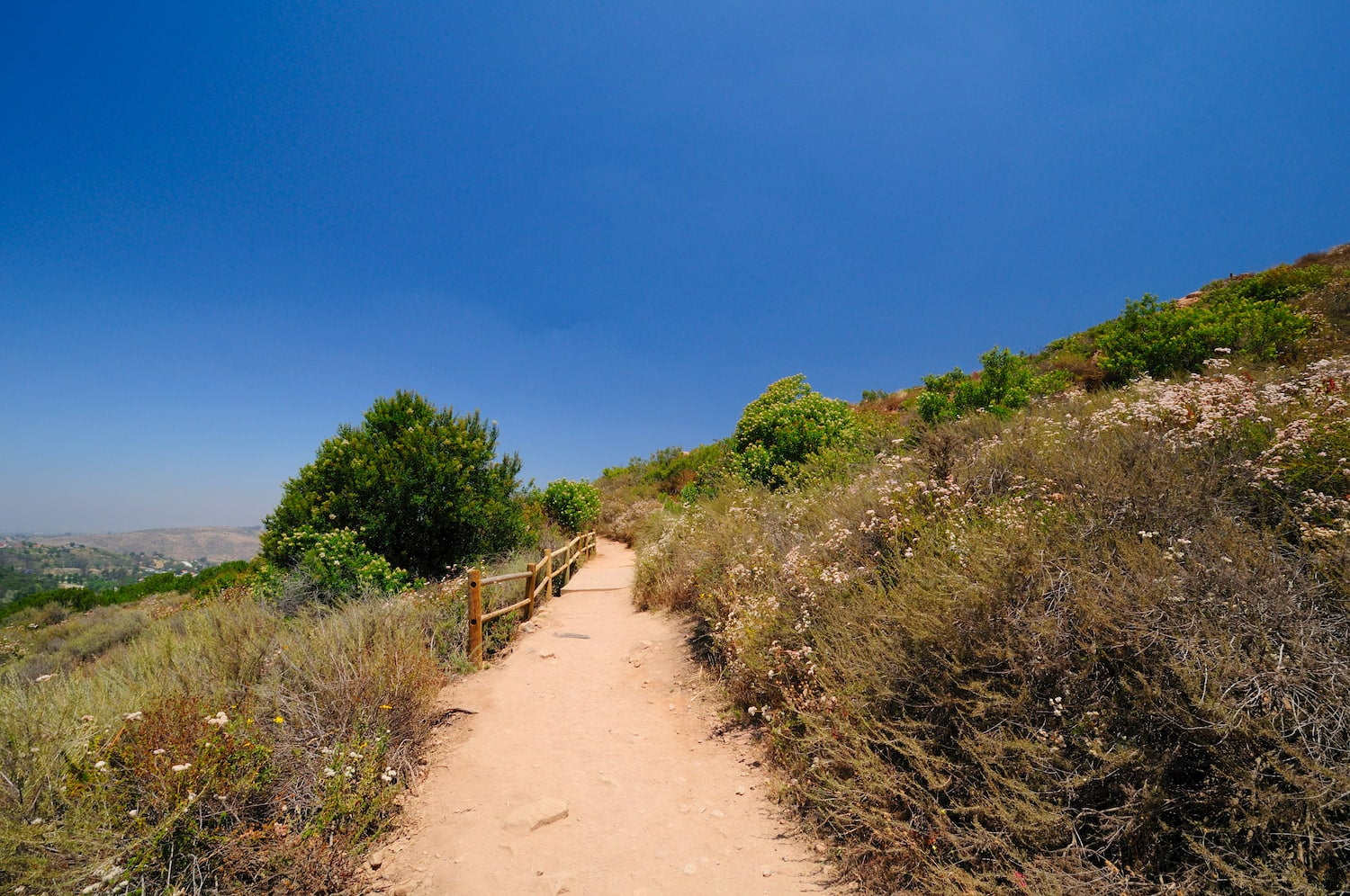 cowles mountain trail