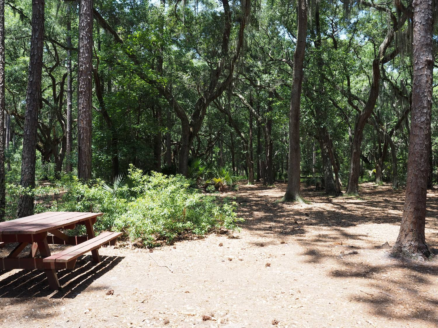 trees and picnic bench