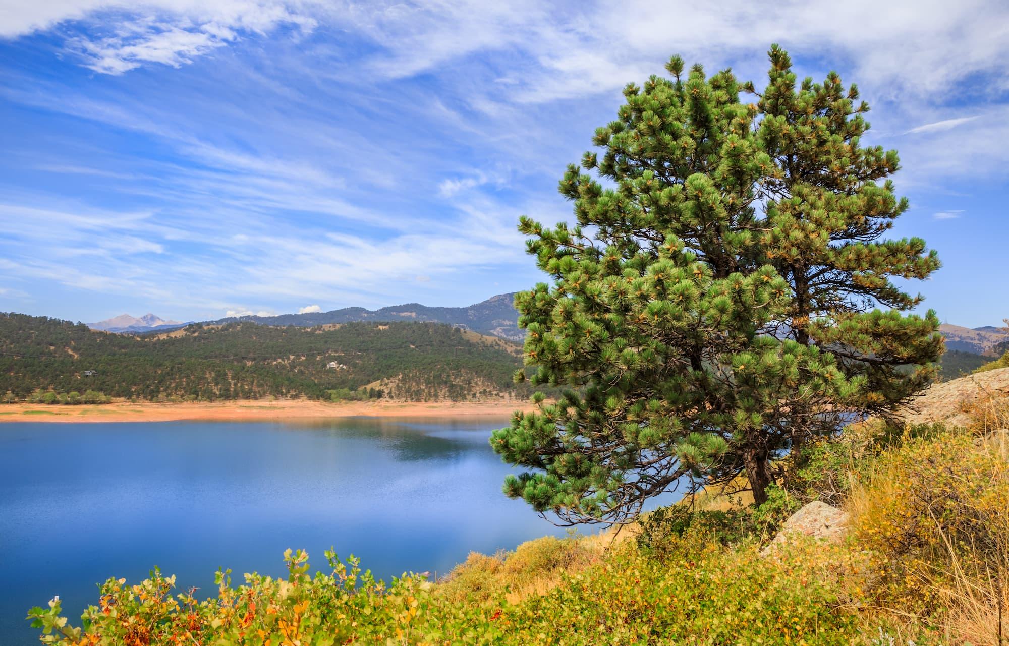 tree on side of carter lake
