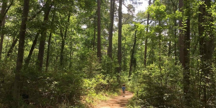 Little boy walks on forested hiking trail in dappled sunshine.