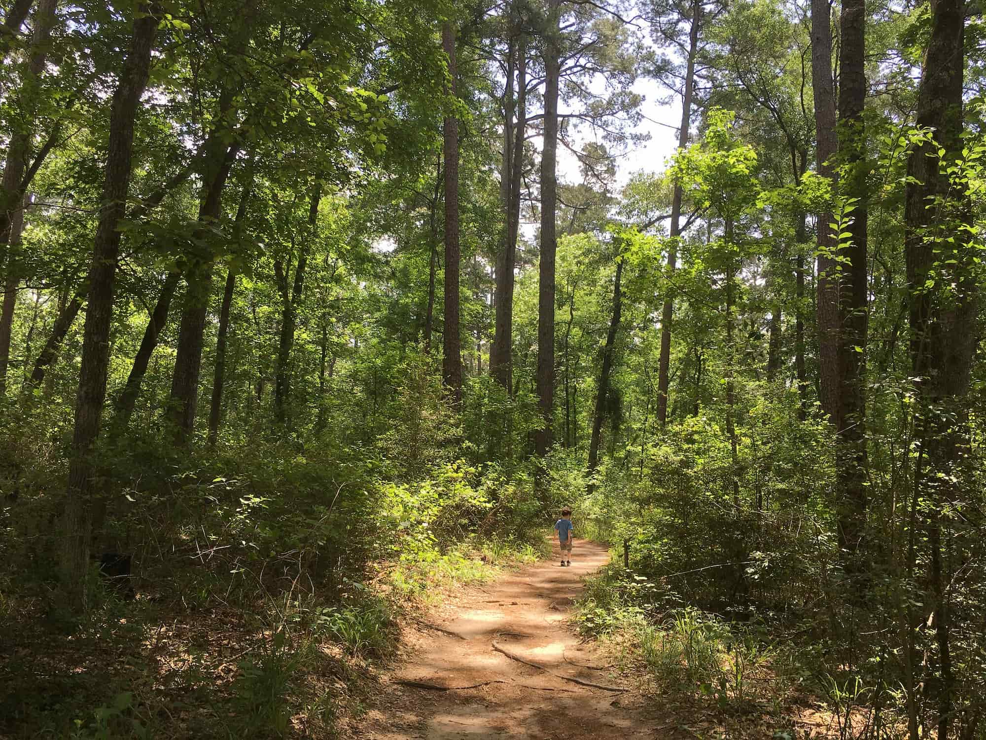 Little boy walks on forested hiking trail in dappled sunshine.